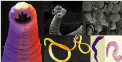 parasitecollage