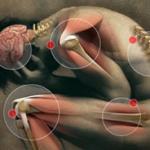 Joints, Muscles & Bone